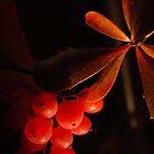 Leaves & berries by woolcos