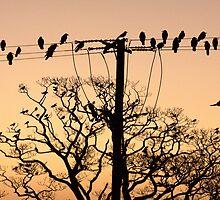 Hanging Around before Sunrise by Steiner62