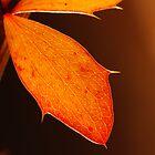 Single leaf by woolcos