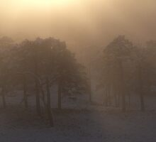 Misty Winter Morning, Glen Affric by PigleT