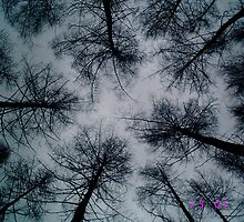Tree Tops by Anna Leworthy