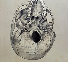 cranium - study of the underside of a human skull by Loui  Jover