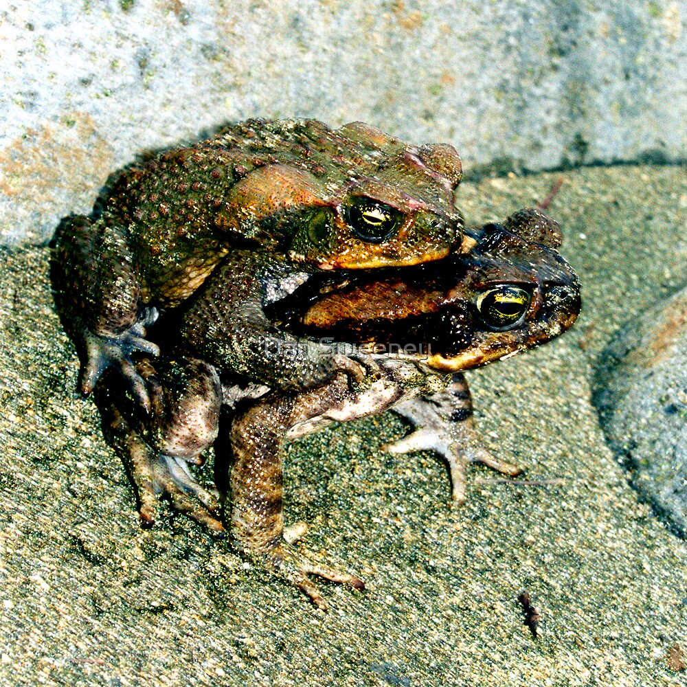 Frogs Humping by Dan Sweeney