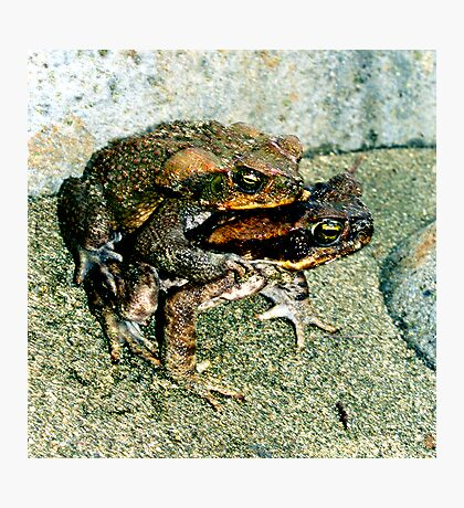 Frogs Humping Photographic Print