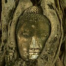 Budda Head in Tree by Dan Sweeney