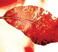 Red leave by Guy Jean Genevier