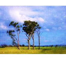 The Four Trees Photographic Print