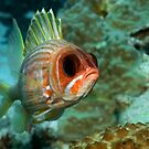 Squirrel Fish by Greg Amptman