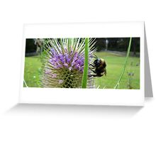 Tasmanian bumble bees 1 Greeting Card