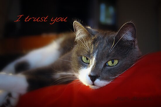 I Trust You © Vicki Ferrari Photography by Vicki Ferrari