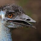 Emu by Nickolay Stanev