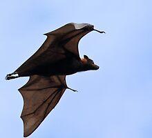 Fruit Bat by Nickolay Stanev