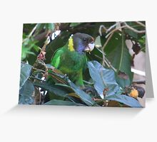 28 Parrot Greeting Card