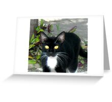 Carribean Cats Greeting Card