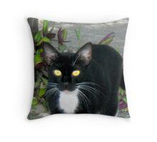 Carribean Cats Throw Pillow