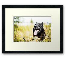 Happy boy Framed Print