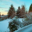 Winter Viewed from Home by Priscilla Turner
