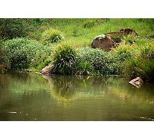 Lush Green - Manning River NSW Photographic Print