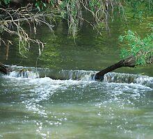 Cascade - Upper Manning River NSW by Bev Woodman