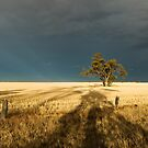 wimmera storm by Andrew Cowell