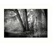 infra red benches Art Print