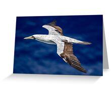 Frigate Bird Greeting Card