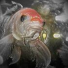 plastic fish by terrebo
