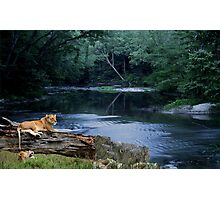 1083-Quiet Jungle Riverside Afternoon Photographic Print