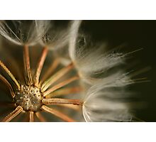 Ode Ao Sol Photographic Print