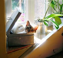 Cannelle, A cat in a tin box by 29Breizh33