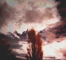 Moonlit Poplar... by Dee009