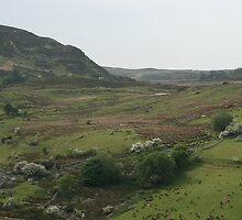 Lough Talt Co Sligo Ireland by JosephSheerin