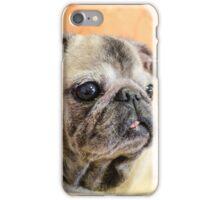 Pug dog iPhone Case/Skin