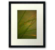 Silken Grass Framed Print