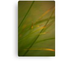Silken Grass Canvas Print