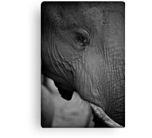 Elephant potrait Canvas Print