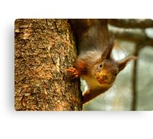 Cheeky Red Squirrel Canvas Print