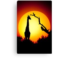 Tall sunset Canvas Print