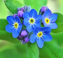 Forget Me Knots  by relayer51