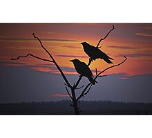 Two Ravens Photographic Print