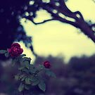 ah the red roses are for love triumphant by brightfizz