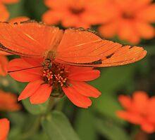 Orange Camoflauge by Adam Bykowski
