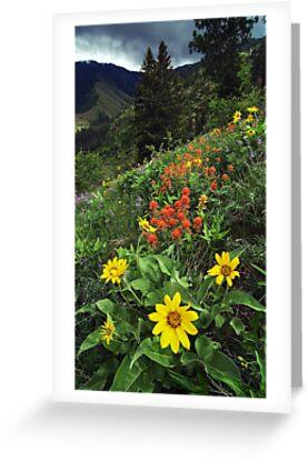 Hells Canyon Wild Flower by Nolan Nitschke