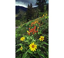 Hells Canyon Wild Flower Photographic Print