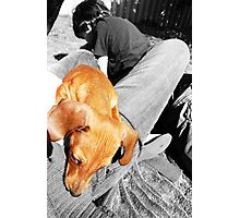 Baby Odie Photographic Print