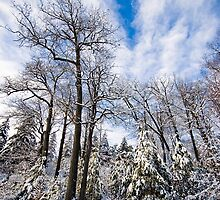 Winter Tree Scene by RBFoto