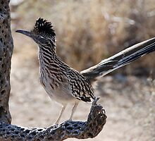 The Roadrunner  by Judy Grant