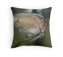 Plastic Fish  Throw Pillow