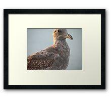 Brown Eyes Gull Framed Print