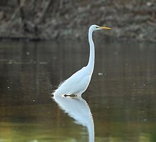 Herron Reflections by Limitlessonline